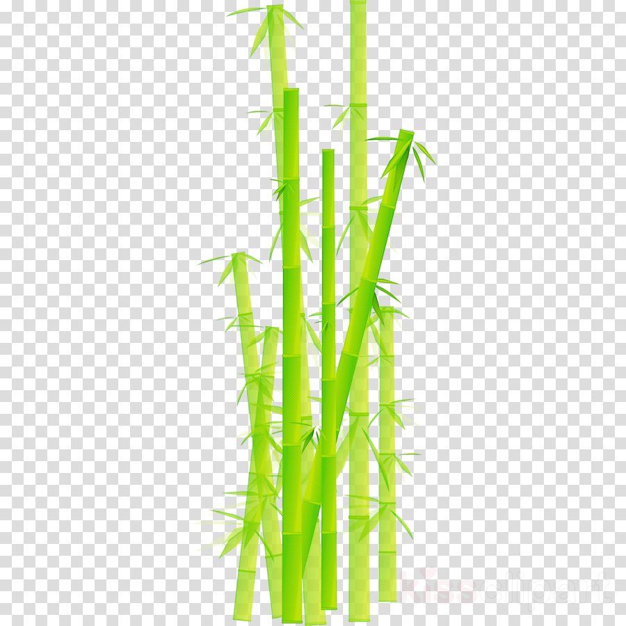 bamboo plant stem plant grass family grass