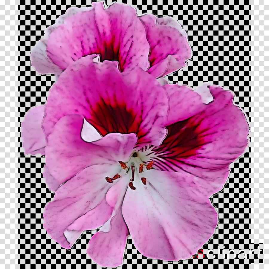 flower petal pink plant violet