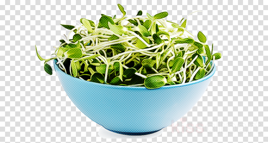 alfalfa sprouts plant sprouting flower crop