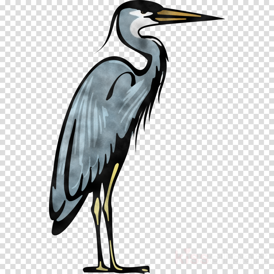 bird beak crane-like bird crane great blue heron