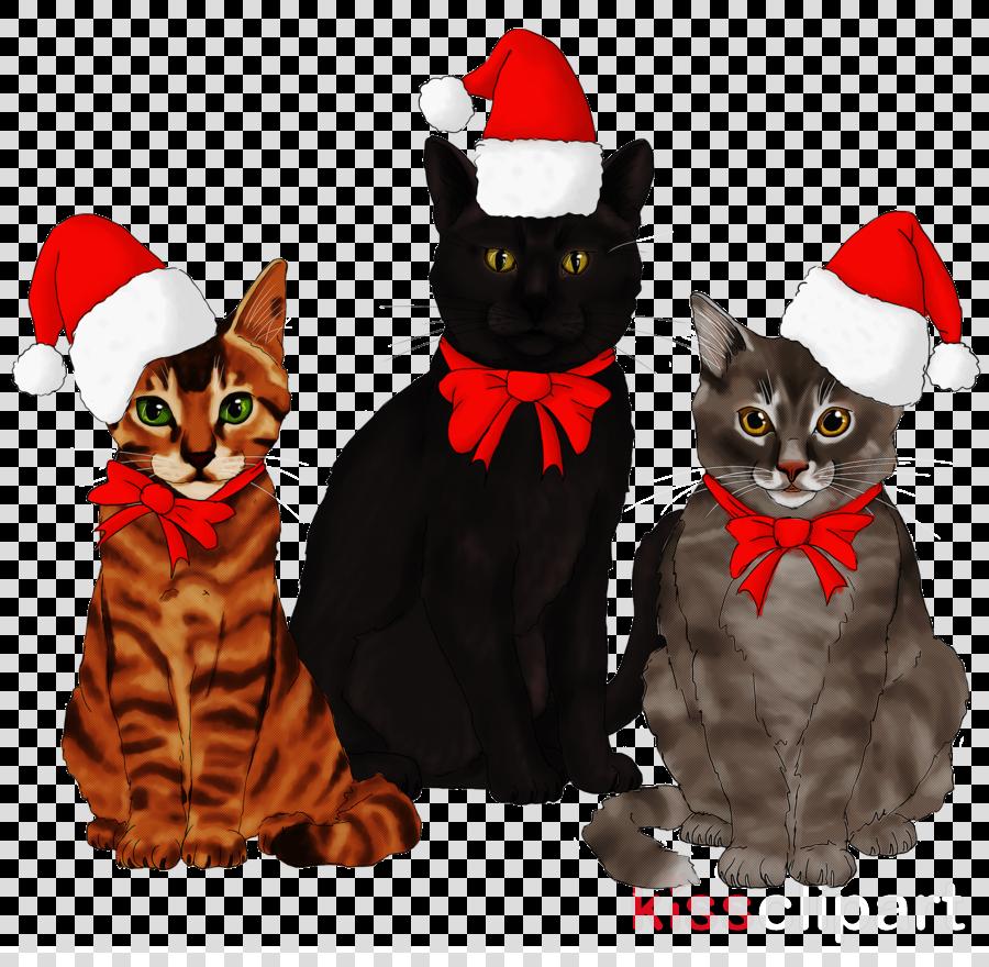 cat black cat small to medium-sized cats kitten costume