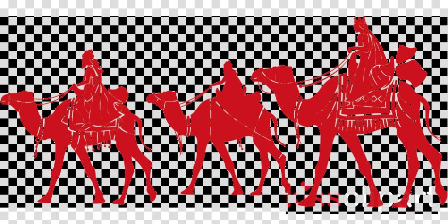 camel camelid arabian camel livestock