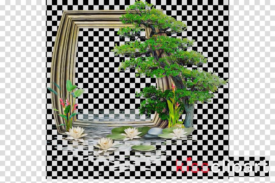 nature vegetation green tree natural landscape