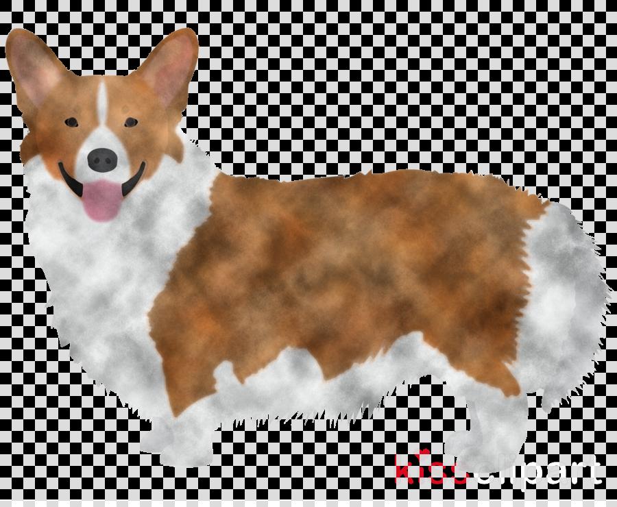 dog welsh corgi pembroke welsh corgi cardigan welsh corgi companion dog