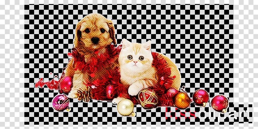 dog puppy kitten shih tzu cockapoo