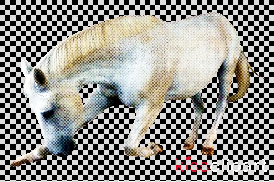 wildlife snout przewalski's horse horse pony