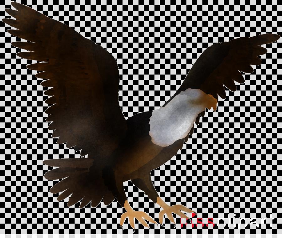 bird eagle bird of prey wing beak
