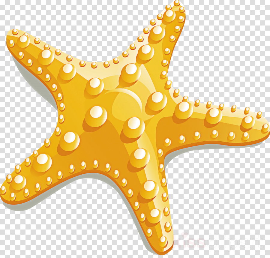 starfish yellow star