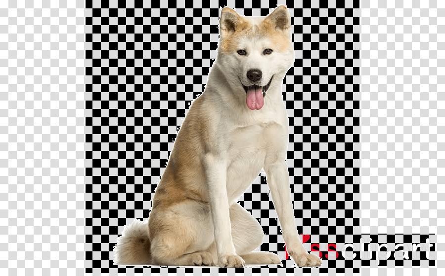dog canaan dog akita akita inu greenland dog