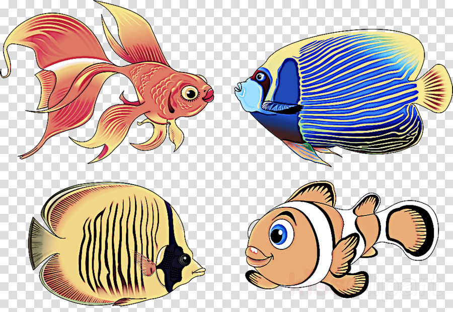 fish pomacanthidae fish butterflyfish animal figure