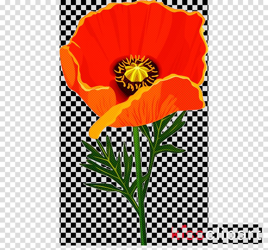 flower plant oriental poppy eschscholzia californica poppy family