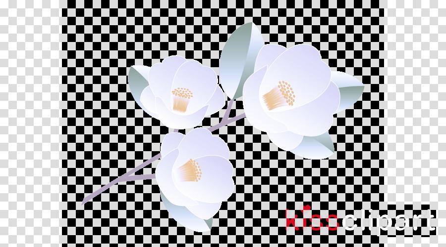 white flower petal plant magnolia