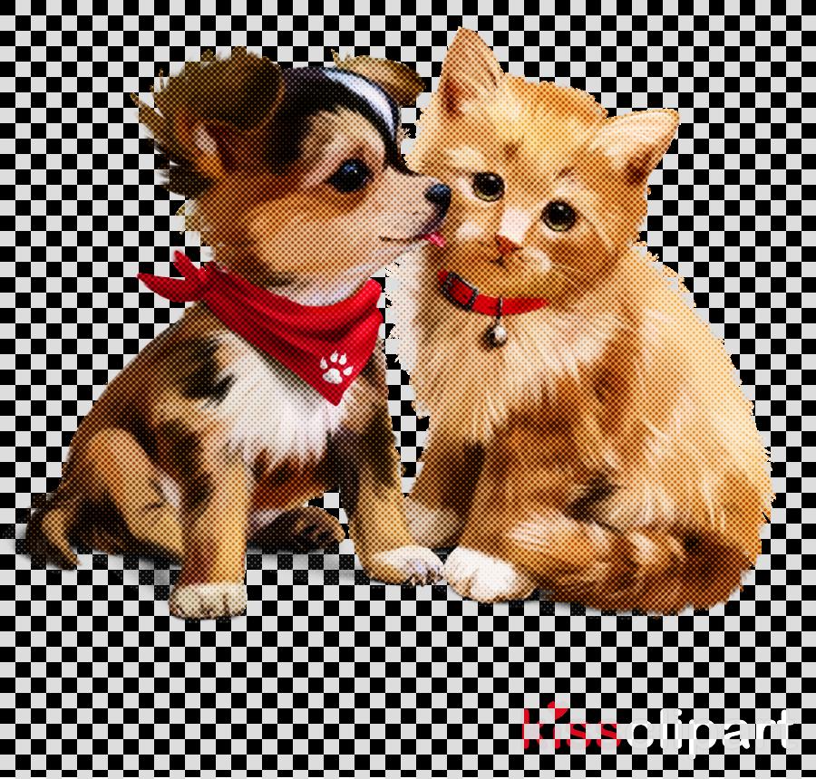 dog puppy companion dog snout chihuahua