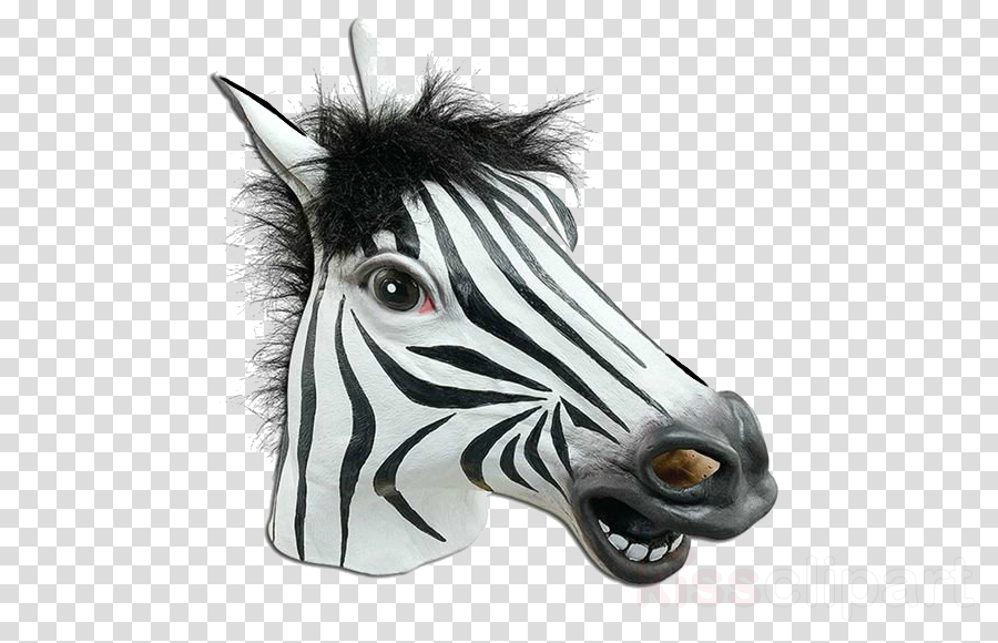 white zebra head snout mane