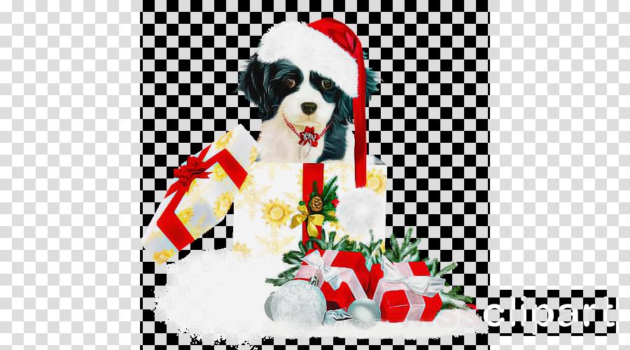 dog shih tzu puppy toy dog sporting group