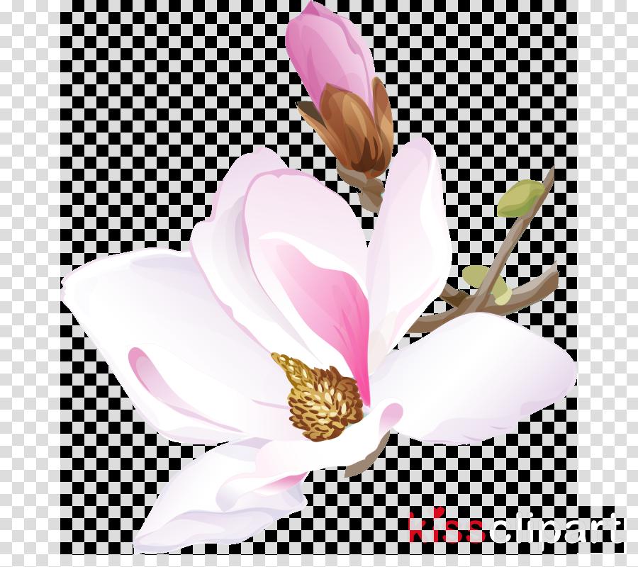 flower petal plant pink magnolia