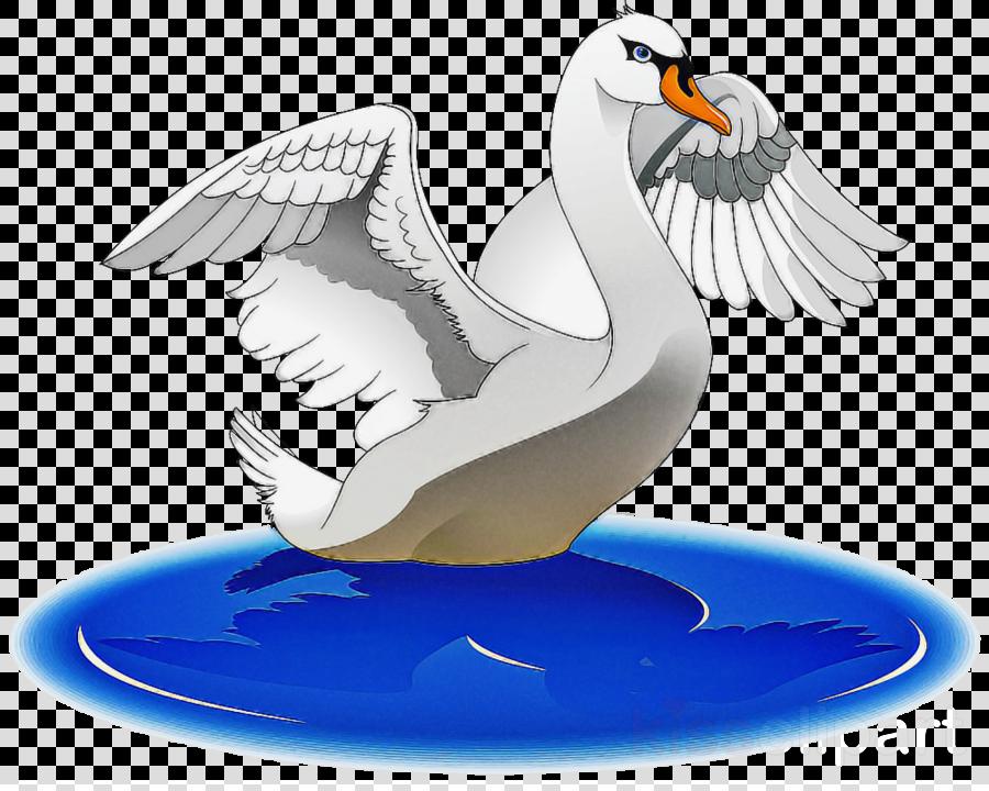 bird beak wing puffin seabird