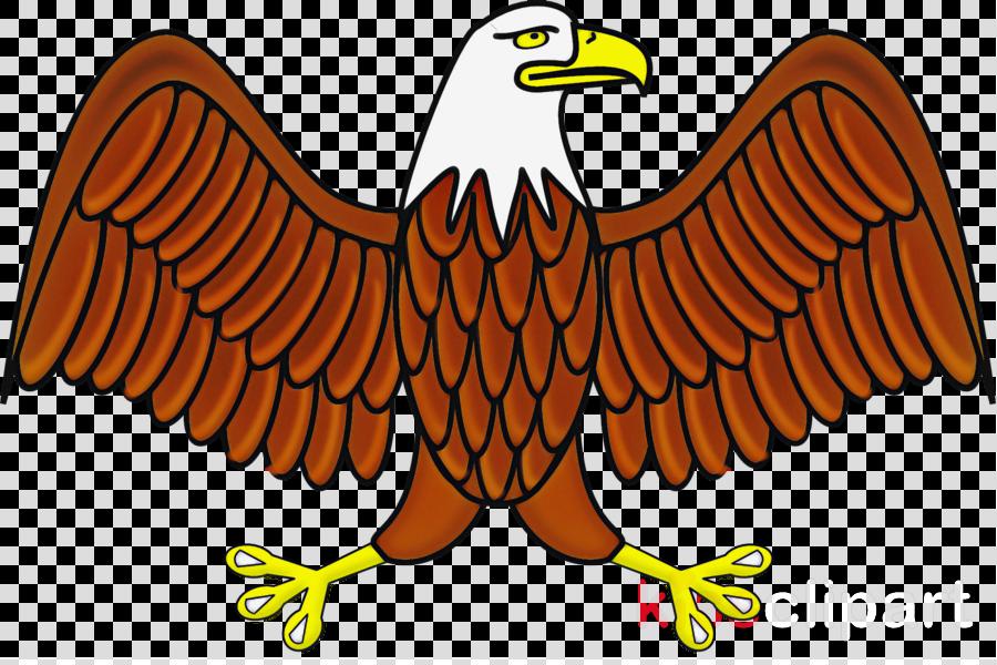 bird eagle bird of prey wing golden eagle
