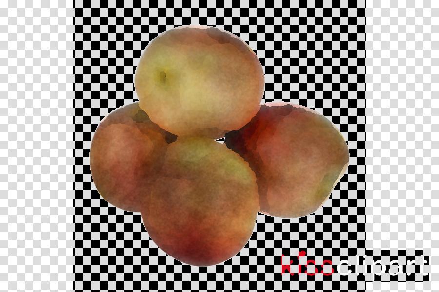 fruit food plant superfood tree