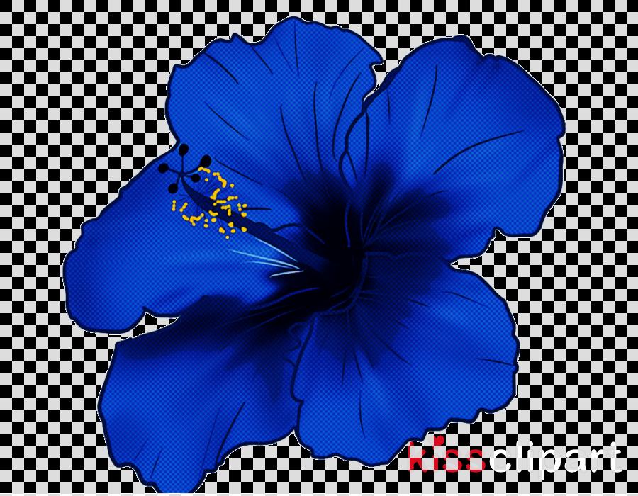 blue hibiscus petal hawaiian hibiscus cobalt blue