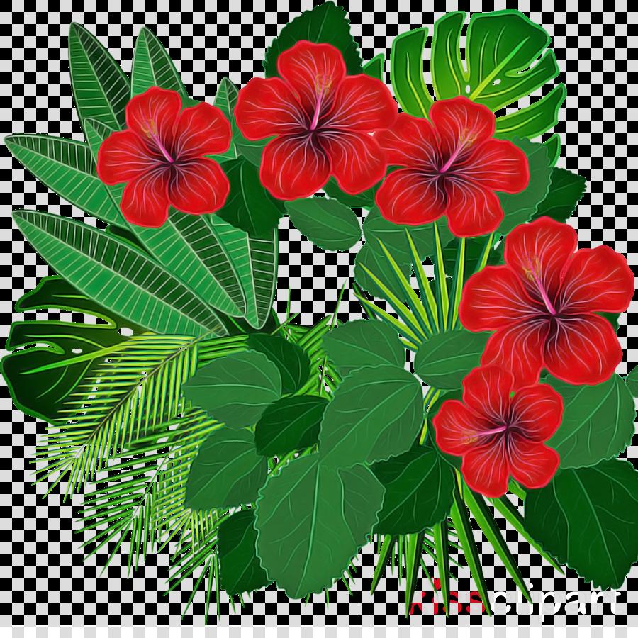 flower plant leaf petal impatiens