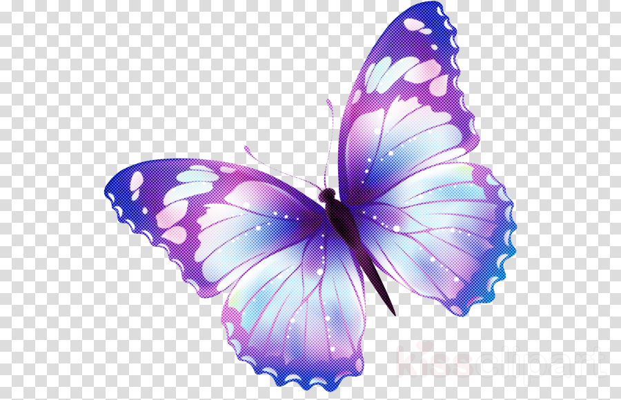 butterfly insect moths and butterflies purple violet