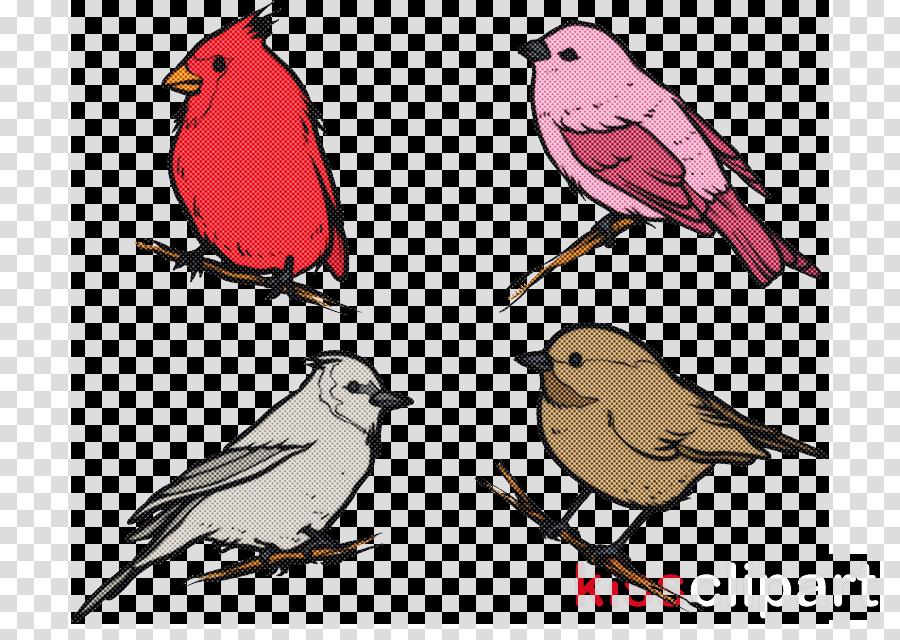 bird beak finch songbird perching bird