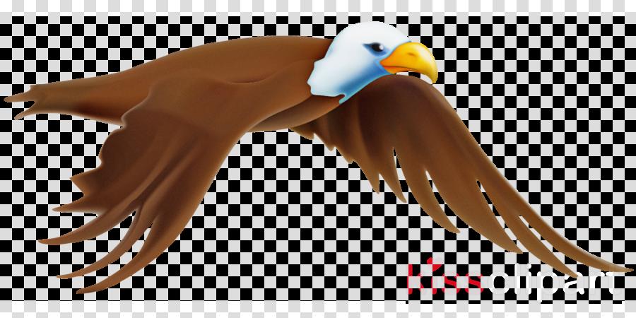 bird beak eagle wing bird of prey