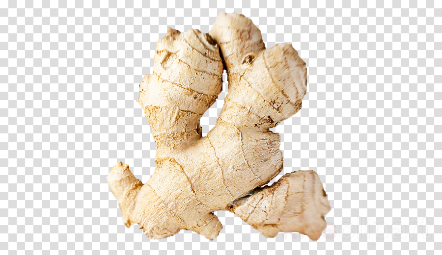 ginger zedoary greater galangal root vegetable galangal