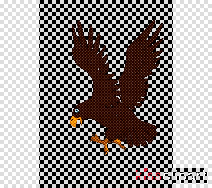 bird eagle bird of prey golden eagle hawk