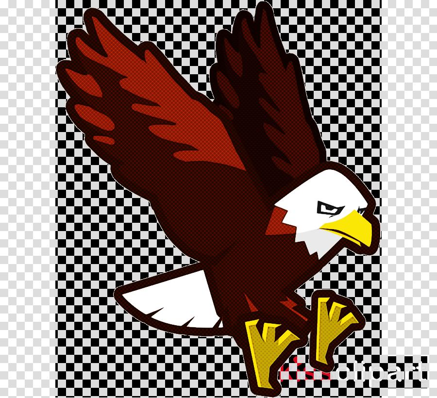 bald eagle bird eagle golden eagle accipitridae