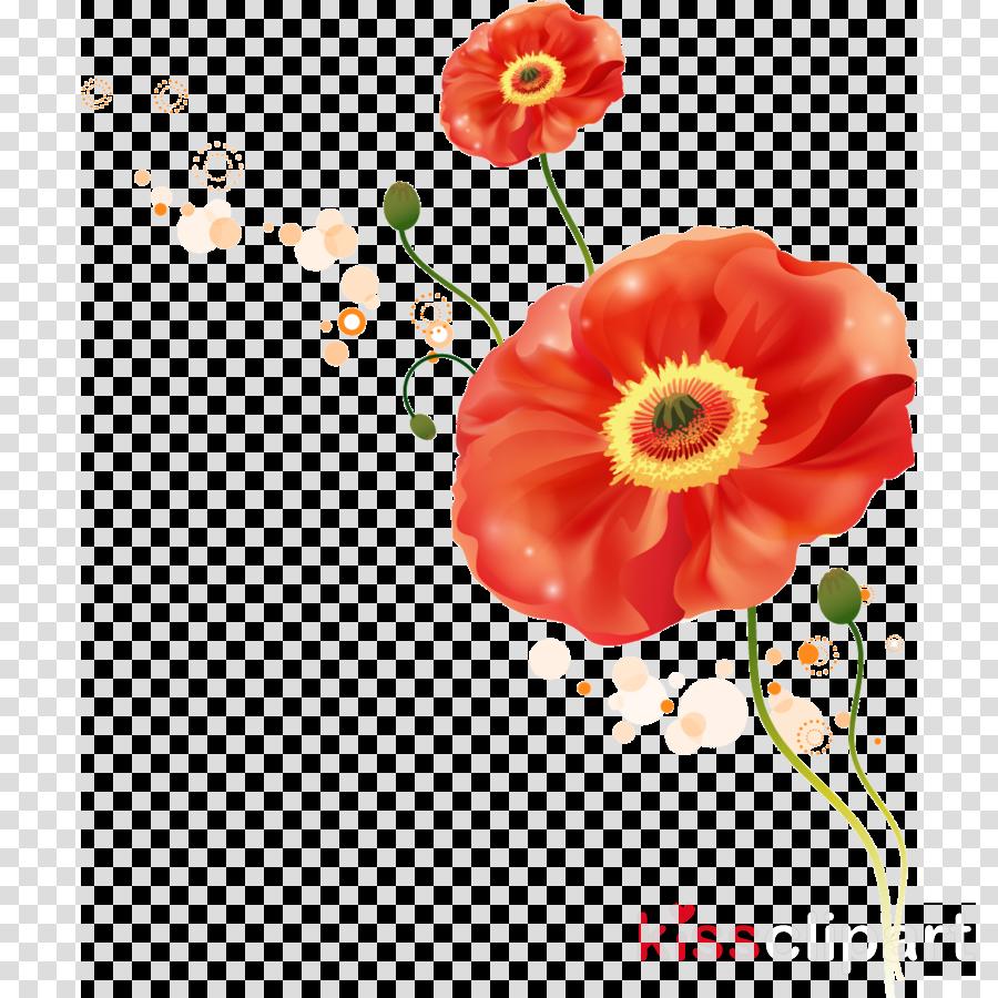 flower red plant petal corn poppy