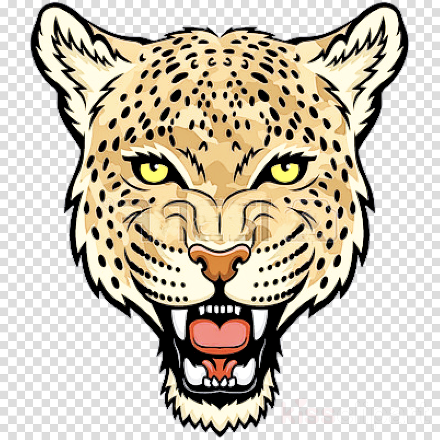 wildlife head snout whiskers leopard