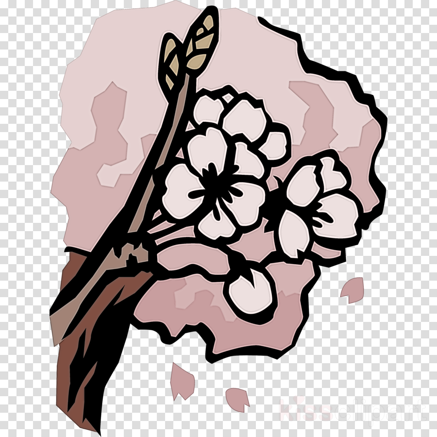 cherry flower floral flower