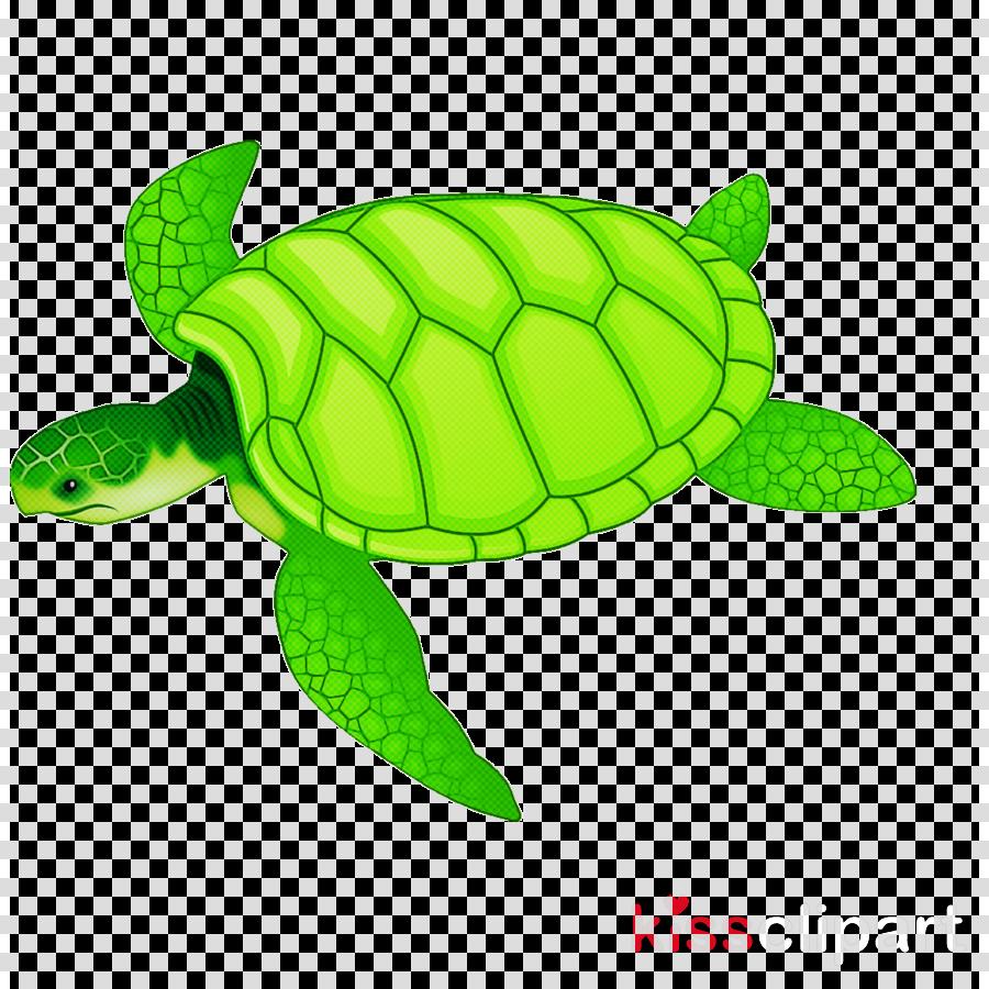 sea turtle green green sea turtle turtle kemp's ridley sea turtle