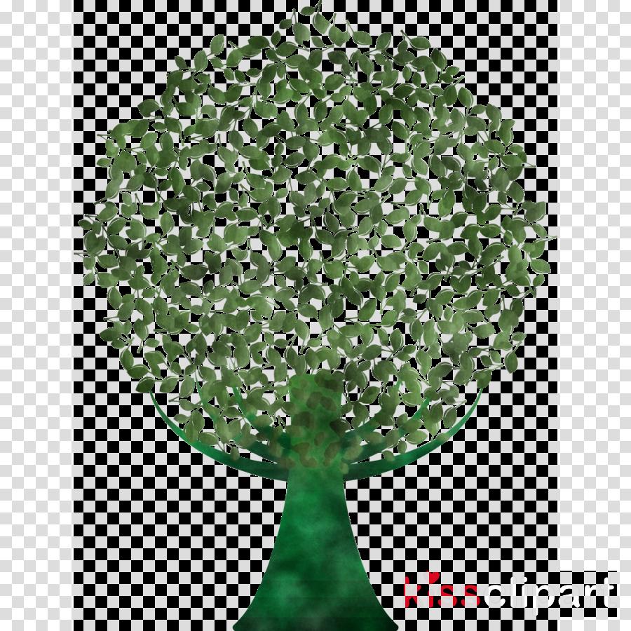 green leaf plant tree flower