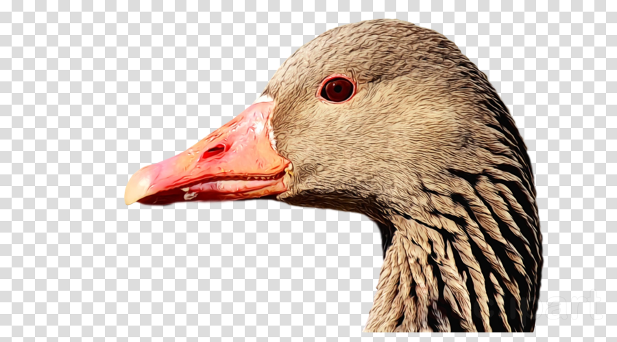 bird beak goose water bird duck