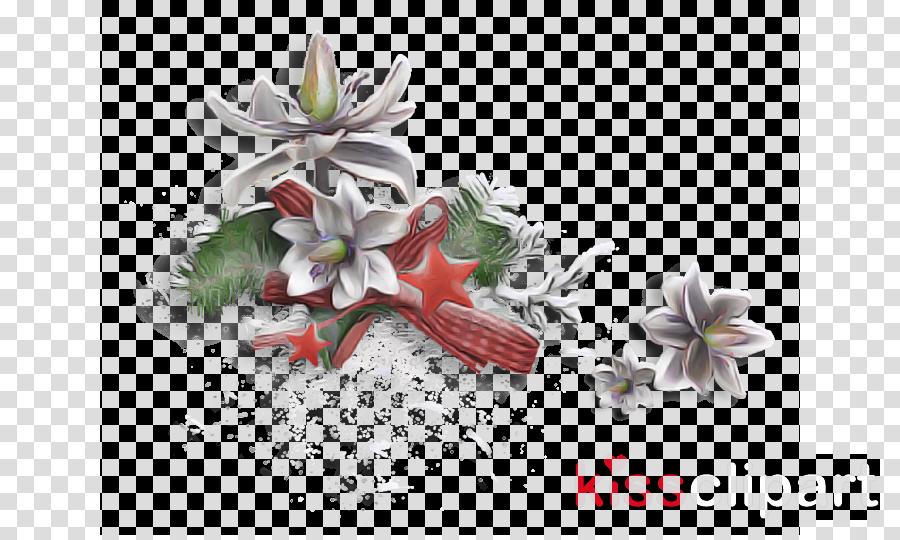 flower plant magnolia