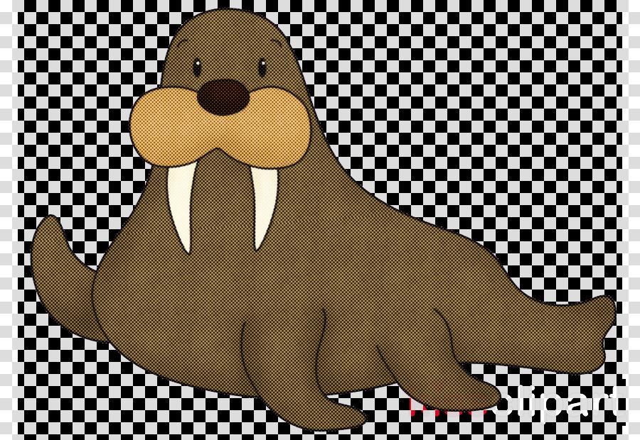 cartoon walrus seal california sea lion animation
