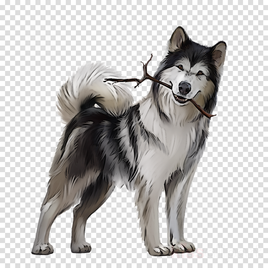 dog alaskan malamute siberian husky canadian eskimo dog alaskan klee kai