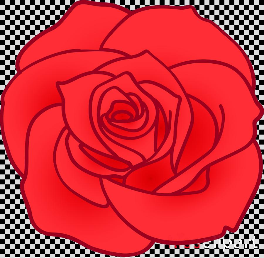 rose flower floral rose