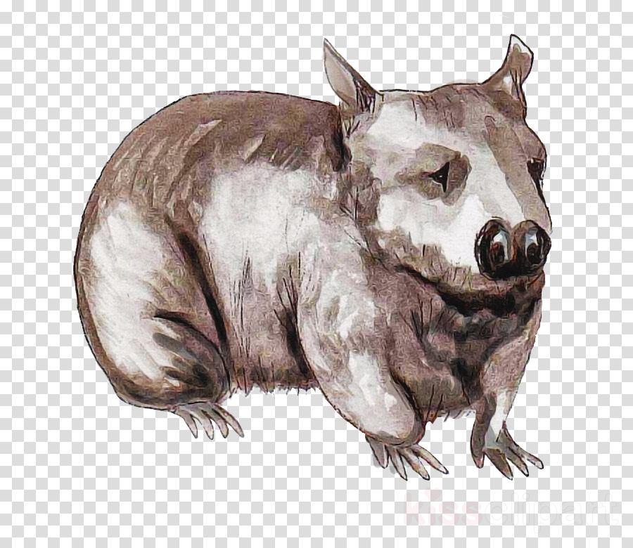 wombat wombat tasmanian devil tapir drawing