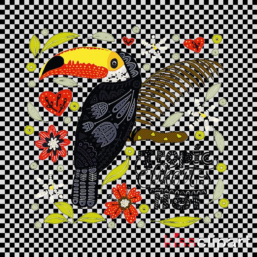 bird toucan piciformes hornbill beak