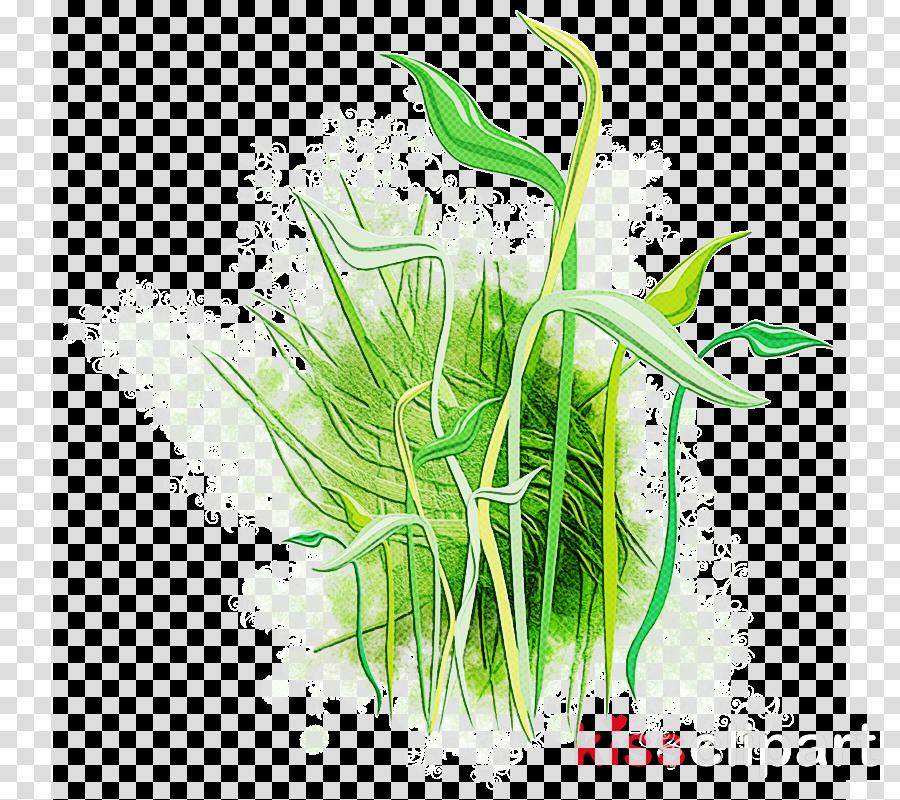 grass plant grass family aquarium decor plant stem