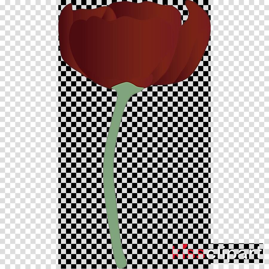 red tulip leaf plant flower