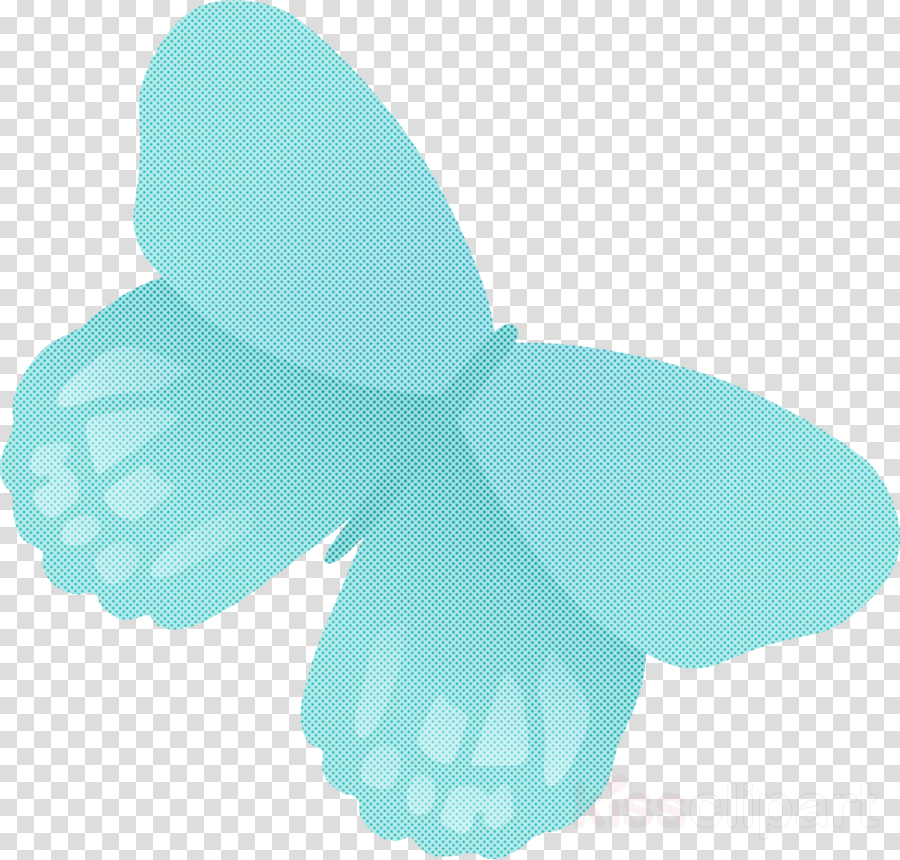 turquoise wing butterfly moths and butterflies