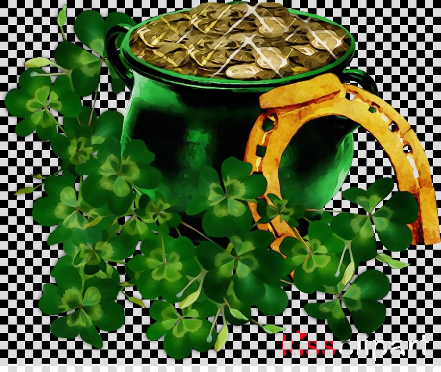 plant leaf herb herbal clover