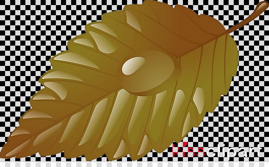 leaf tree plant