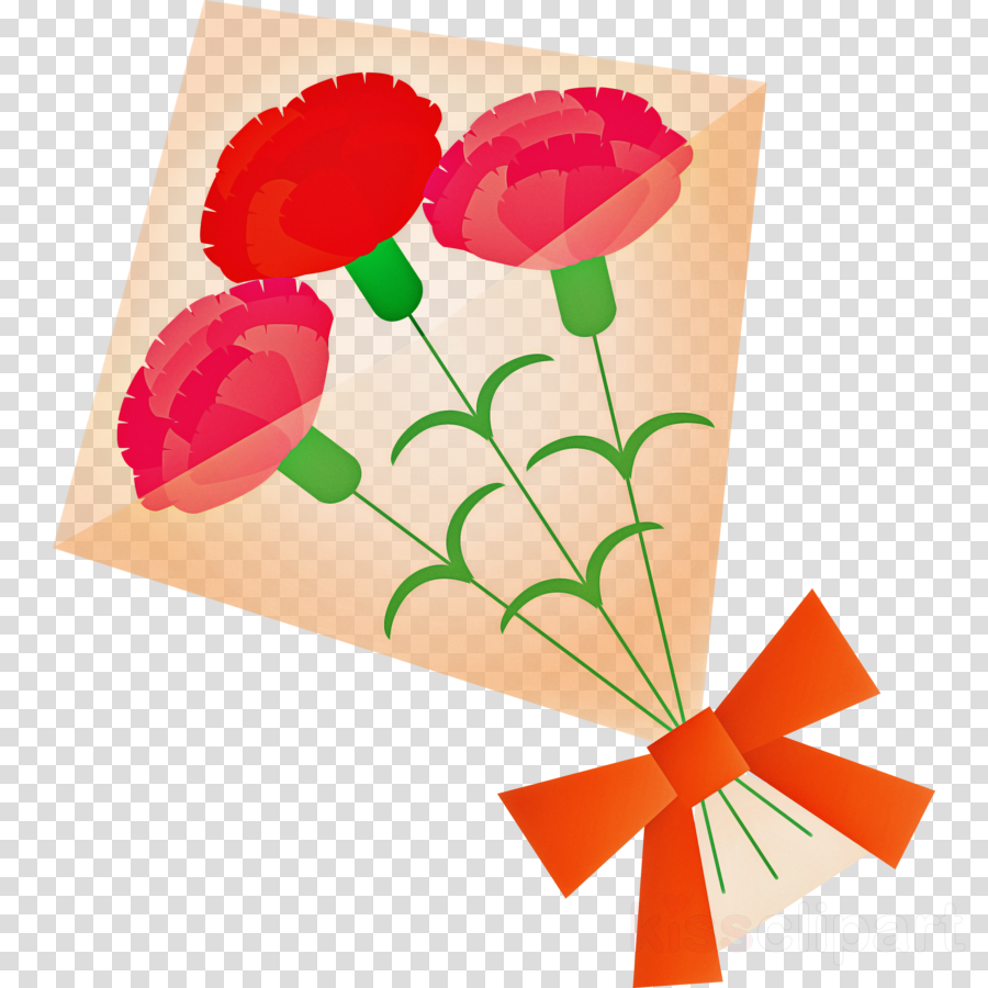 Mothers Day Carnation Mothers Day flower