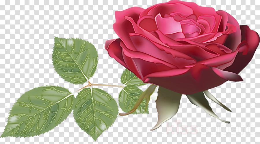 one flower one rose valentines day